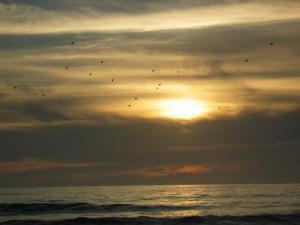 Beach, Aptos day 1 (16)