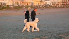 Rio Del Mar Beach 2003 standard poodle